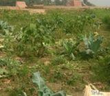 Road side land in Bongaon, Savar