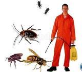 Scorpion Pest Control Services
