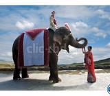 Elephant Rent