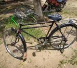 phoenix fresh bicycle