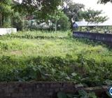 7 Katha, 4 Katha, 3 Katha ready Corner plot near Daffodil Un
